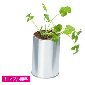ハーブ&ベジ(缶入り)(コリアンダー)