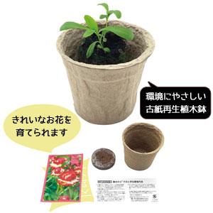 ECOポット 花の種