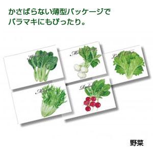 横型イラスト種子1個(野菜)