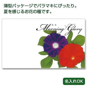 横型イラスト種子夏の花1個(朝顔)